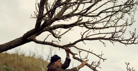image de l'oeuvre Images de fruits rêvées par de vieux paysans en hiver de  Gregor Božič