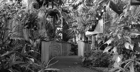 image de l'oeuvre D'après le Jardin de  Juan Pablo Villegas Delgado Juan Pablo Villegas Delgado