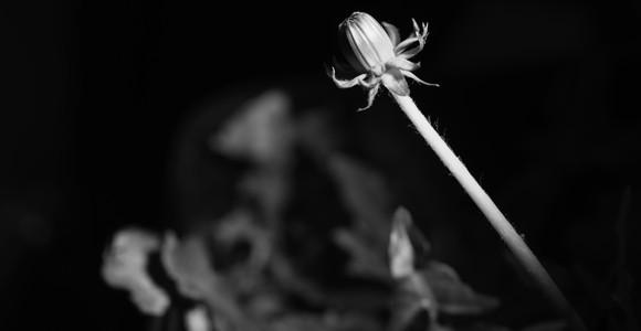 image de l'oeuvre Natural Process Activation #3 Bloom de  Hicham Berrada Hicham Berrada