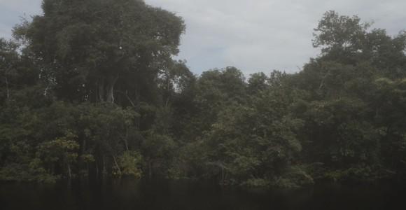 image de l'oeuvre River view de  Alice Furtado Alice Furtado